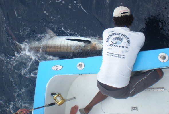 Marlin Fishing Charter out of Ocotal Hotel Guanacaste