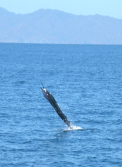 Offshore Fishing Charters out of Flamingo Beach, Costa Rica