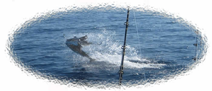 Tamarindo Sportfishing, Sailfish