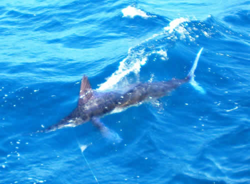 Offshore Fishing Charters out of Matapalo Beach, Costa Rica