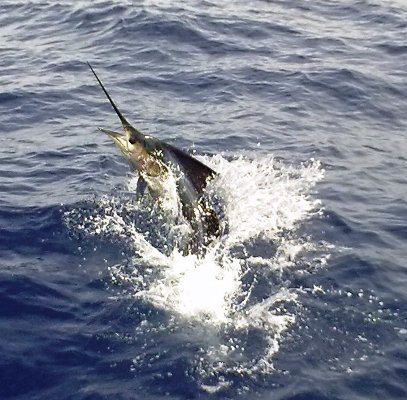 Offshore Fishing Charters out of Four Seasons Hotel Costa Rica