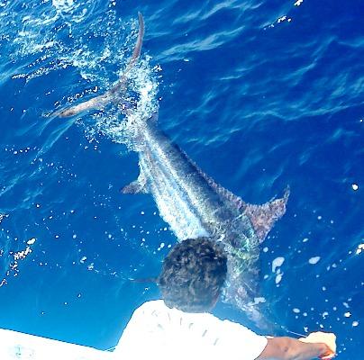 Roosterfish charters riu palace costa rica guanacaste for Deep sea fishing costa rica